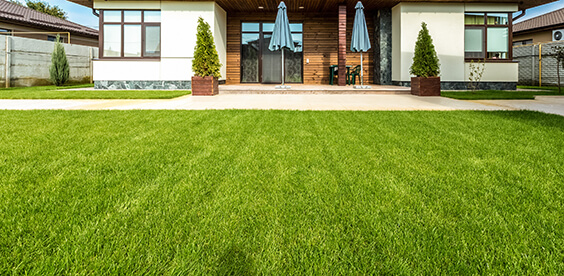 These fertilizers provide the basic elements needed for good lawn and garden care.